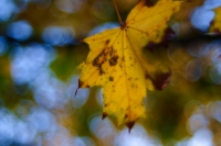 Autumn-leaves-on-variations-#1-podzimni-listi-variace-1