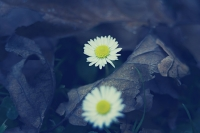 flower-on-leaves-kvetiny-v-listi